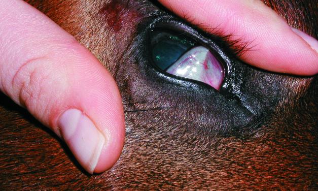 Equine Tetanus: Signs and Treatment