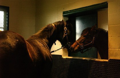8 Steps for Breeding Your Mare