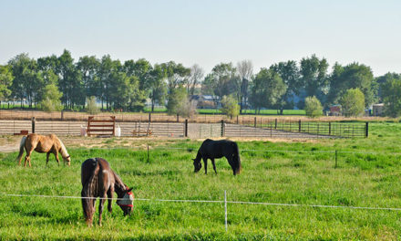 Spring Pasture Management Tips