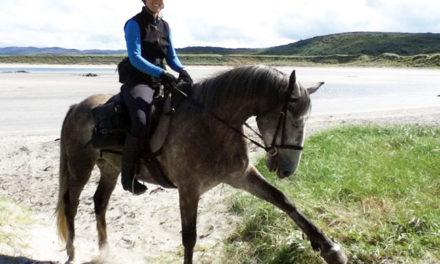 A Hardy, Handy Irish Horse