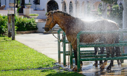 10 Summer Horse Care Resources on TheHorse.com