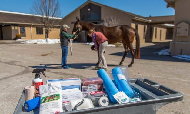 Equine First-Aid Kit for Minor Injuries and Acute Wound-Care