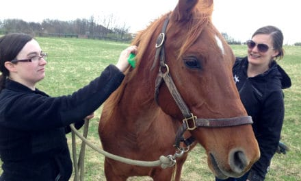 How We Can Help Senior Horses Seeking Homes