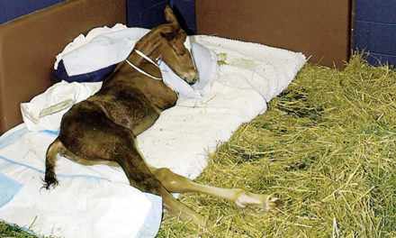 Young Horse Health Threats
