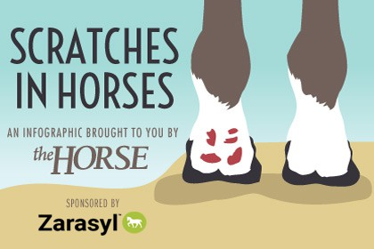 Infographic: Scratches in Horses