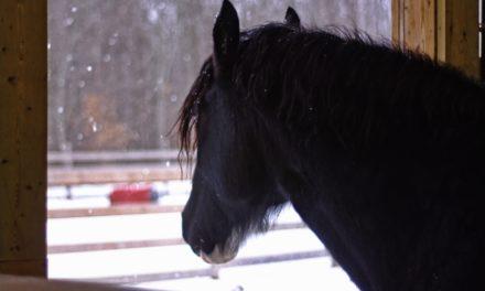 Keeping Horse Airways Healthy During Winter