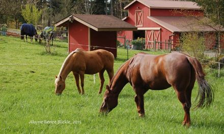 You and Your Horse Can Become Environmentally Friendly