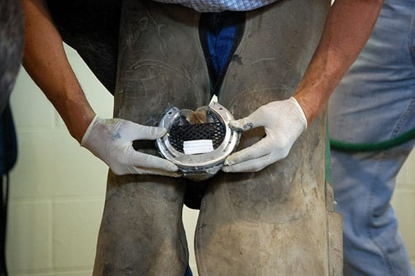 A Look at Therapeutic Horseshoeing