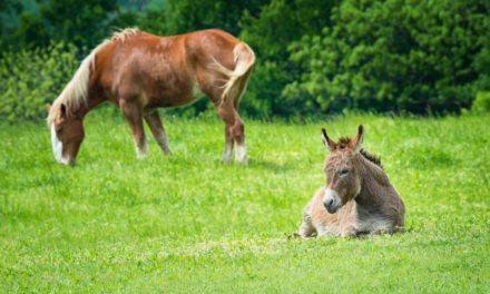 Do Donkeys Pose a Disease Threat to Horses at Events?