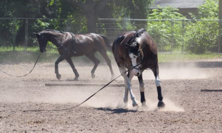 Problems in Passing Other Horses in the Arena
