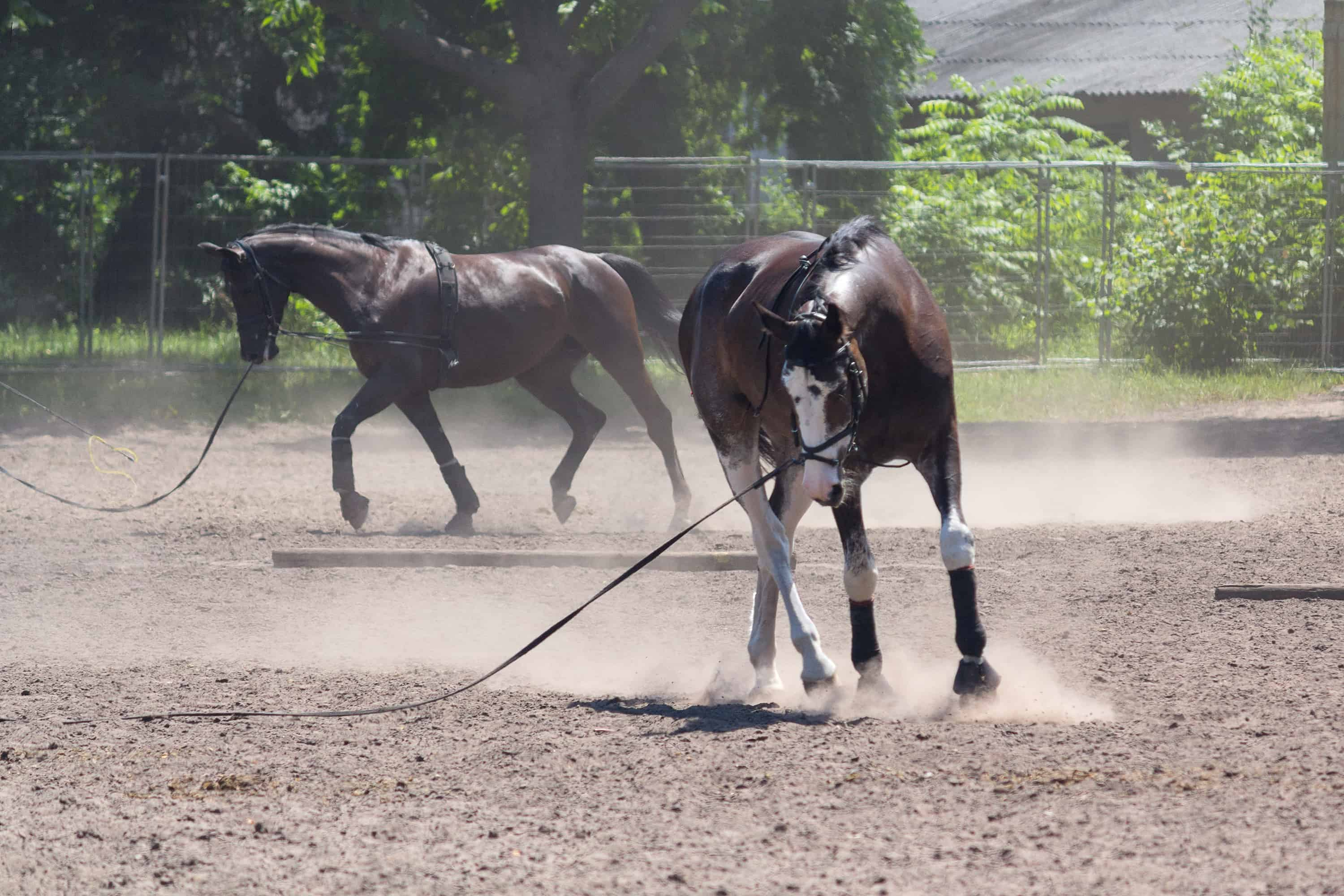 Is Your Horse Stressed Out at Shows?