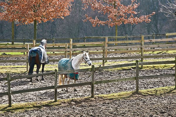 Horses standing in muddy paddock