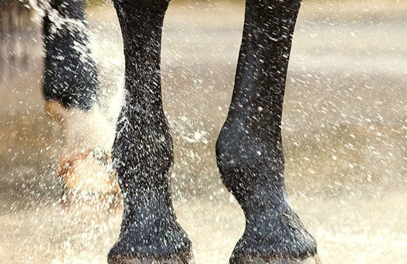 Solving Skin Issues on Horses' Legs