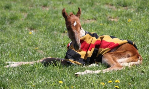 Equine Acute Respiratory Distress Syndrome