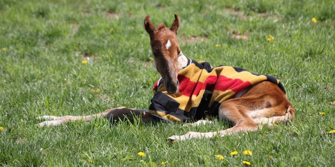 Equine Acute Respiratory Distress Syndrome