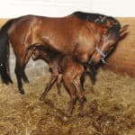 Save That Foal: How to Keep Newborn Foals Healthy