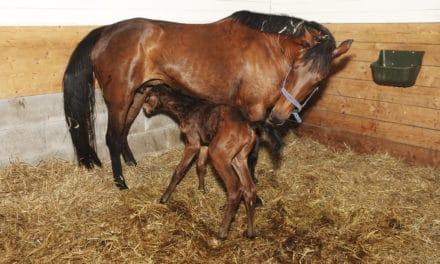 Bone Development Before Birth in Horses