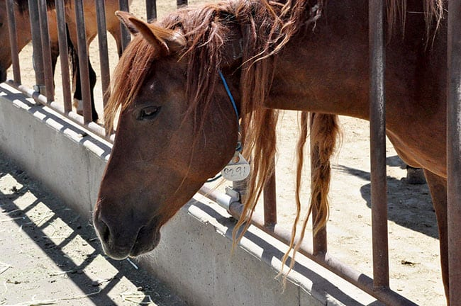 My Mustang Mare Isn't Who I Thought She Was