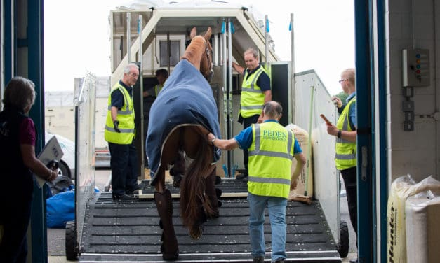 What it Takes To Ship Competition Horses Overseas