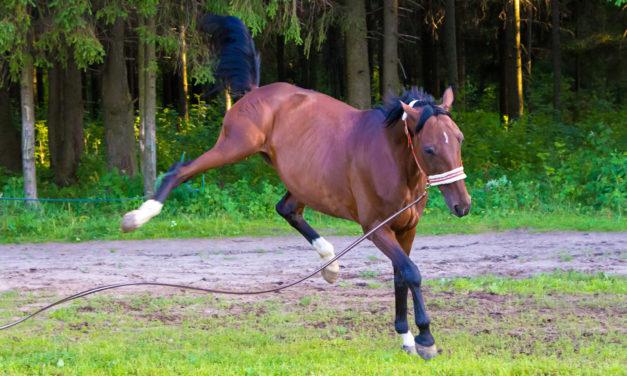 Is It My Horse, or Is It Me?