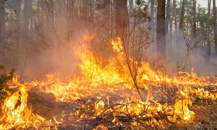 Protecting Horse Properties Against Wildfire