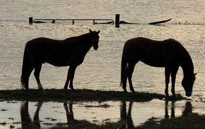 After the Flood: Cleaning Your Horse Farm