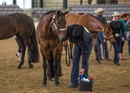 Technology Improving Horse Health Record-Keeping