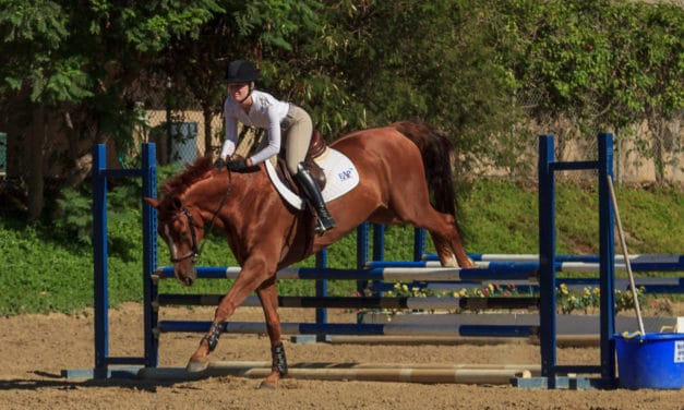 Why Does My Horse Stumble After Jumping?