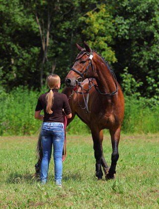 Dominance in Human-Horse Relationships