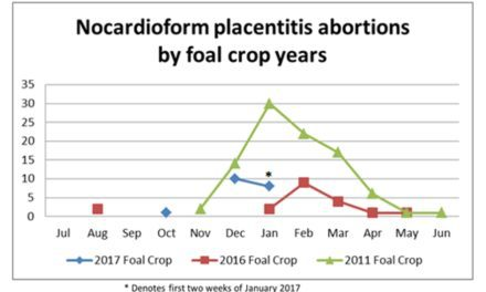 Nocardioform Placentitis Concerns for Kentucky Foal Crop