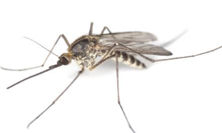 Mosquito-Borne Disease and Your Horse