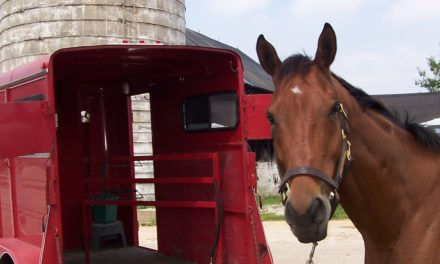 How Do I Get My Horse to Load in a Trailer?
