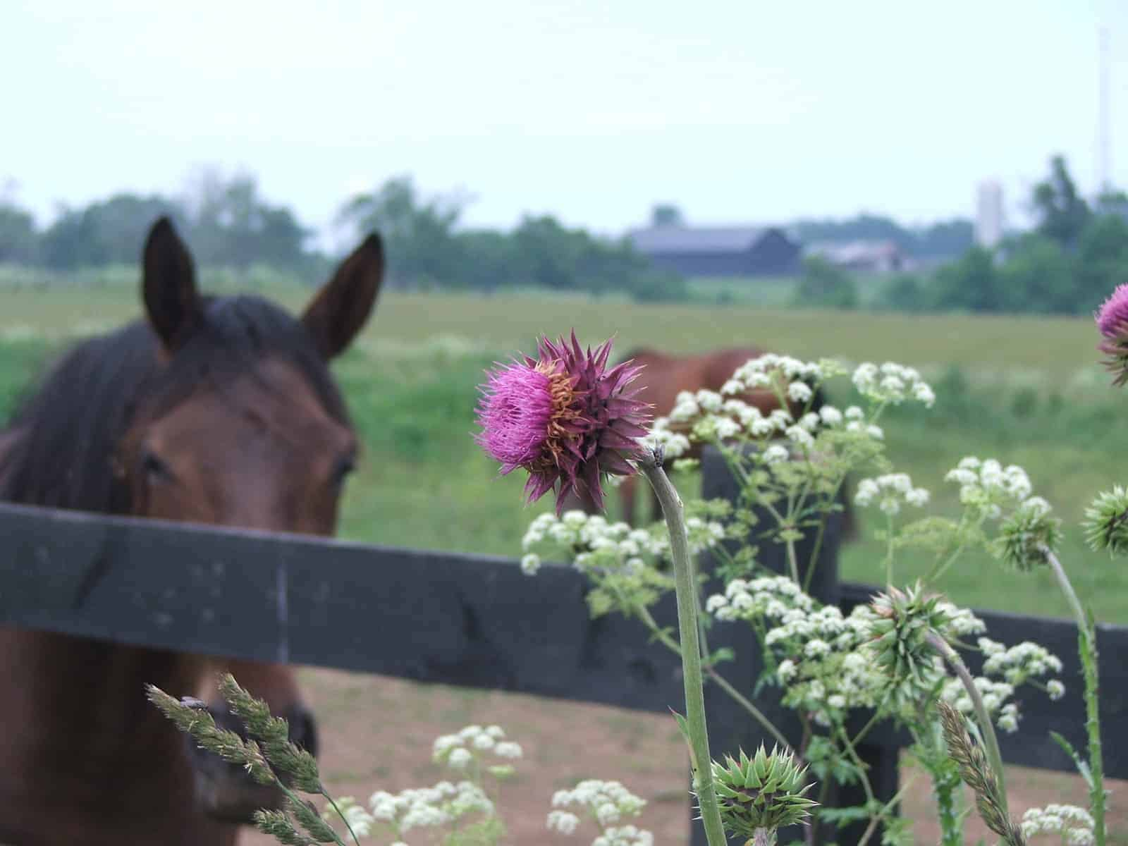 Controlling Pasture Weeds The Horse