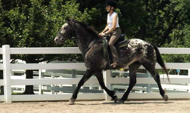 Researchers Pinpoint Link Between Appaloosa Coloring and Night Blindness
