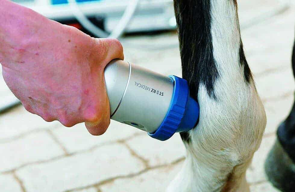 Shock Wave Therapy and PSGAGs: Effects on Arthritis – The Horse