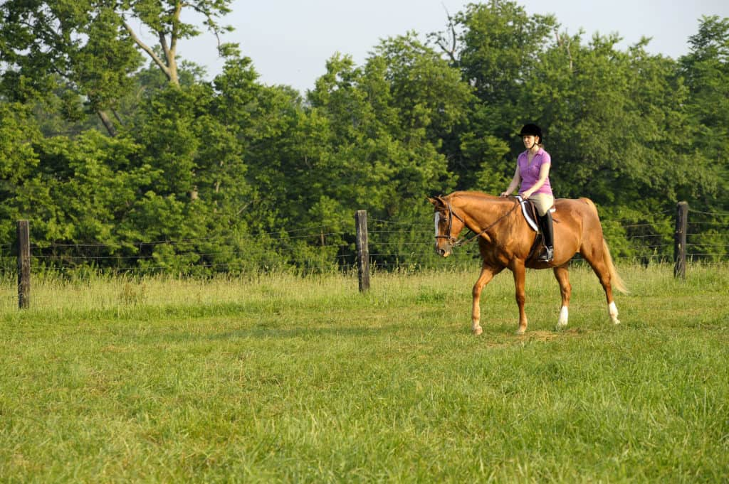 Use Careful Physical Conditioning for Previously Idle Horses