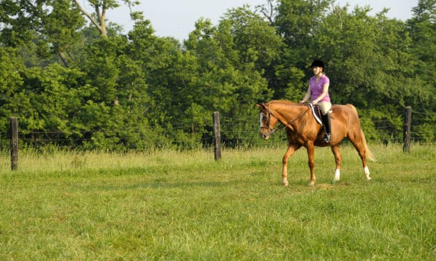Conditioning Arthritic Horses: Do's and Don'ts