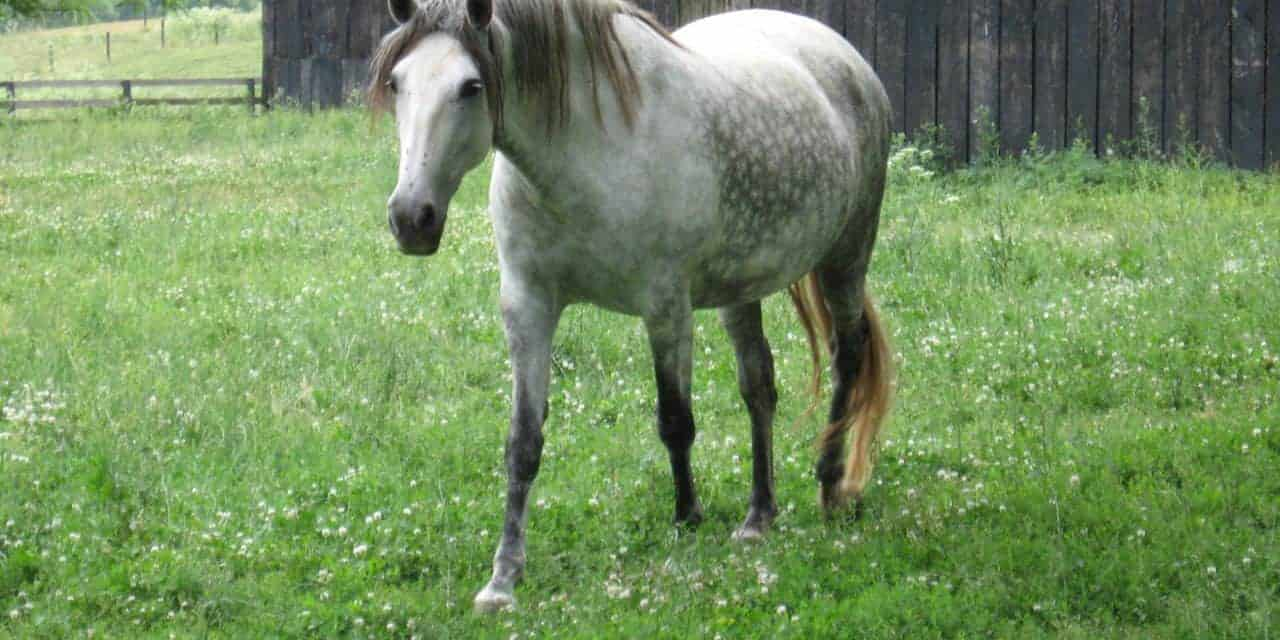 Cushings disease or equine metabolic syndrome the horse cushings disease or equine metabolic syndrome fandeluxe