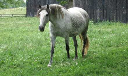 Similar but Different: Equine Cushing's Disease and EMS