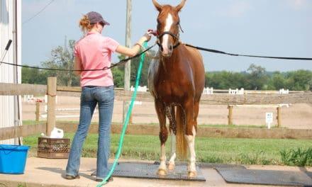 Heat Exhaustion vs. Heat Stroke in Horses
