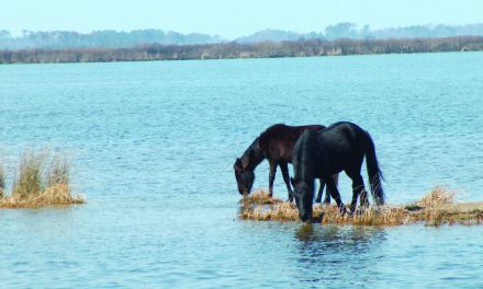 Corolla Wild Horse Bill Gets House Nod