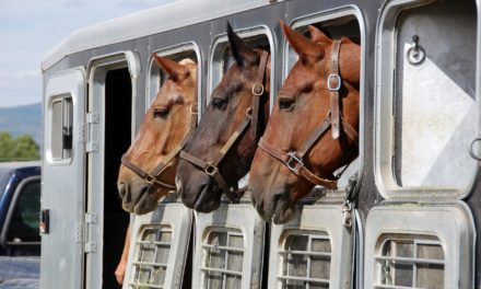 Ask the Vet LIVE: Traveling Safely with Horses, July 31