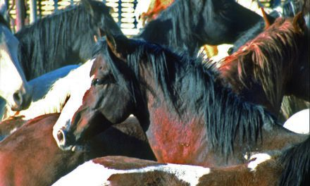 AAEP Issues Recommendations for Wild Horse & Burro Program