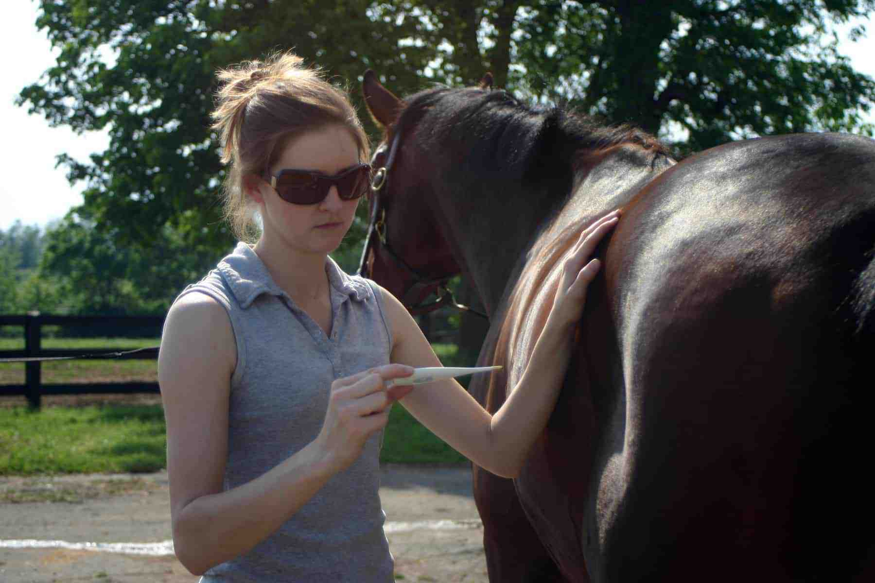 One Maryland Horse Sick, 60 More Exposed to EHV