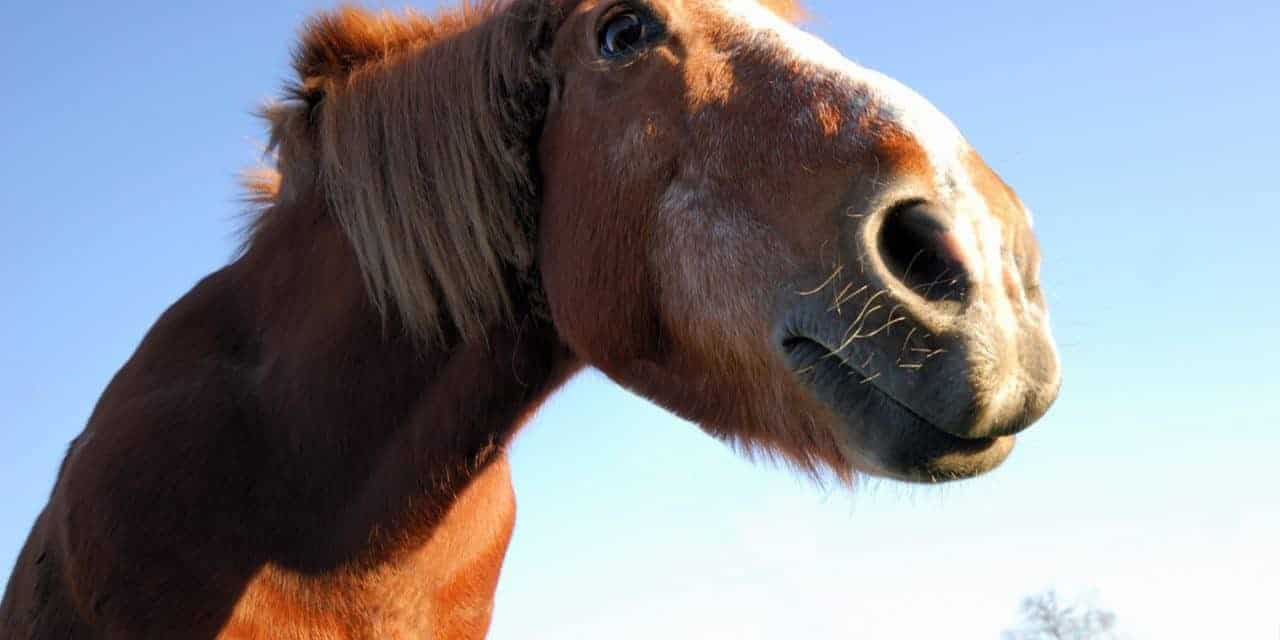 Study: Improved Owner Education Needed for Older Horse Care