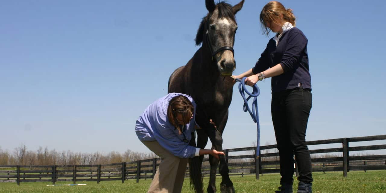 Equine Neurologic Exams: Be Thorough and Consistent
