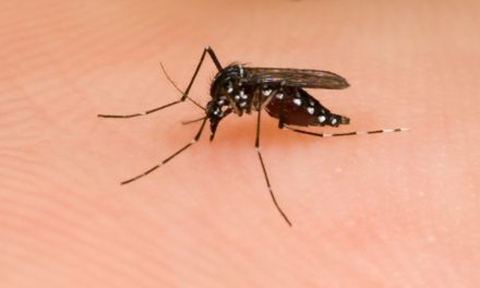 Creepy Crawlies and Horses: Mighty Mosquitoes