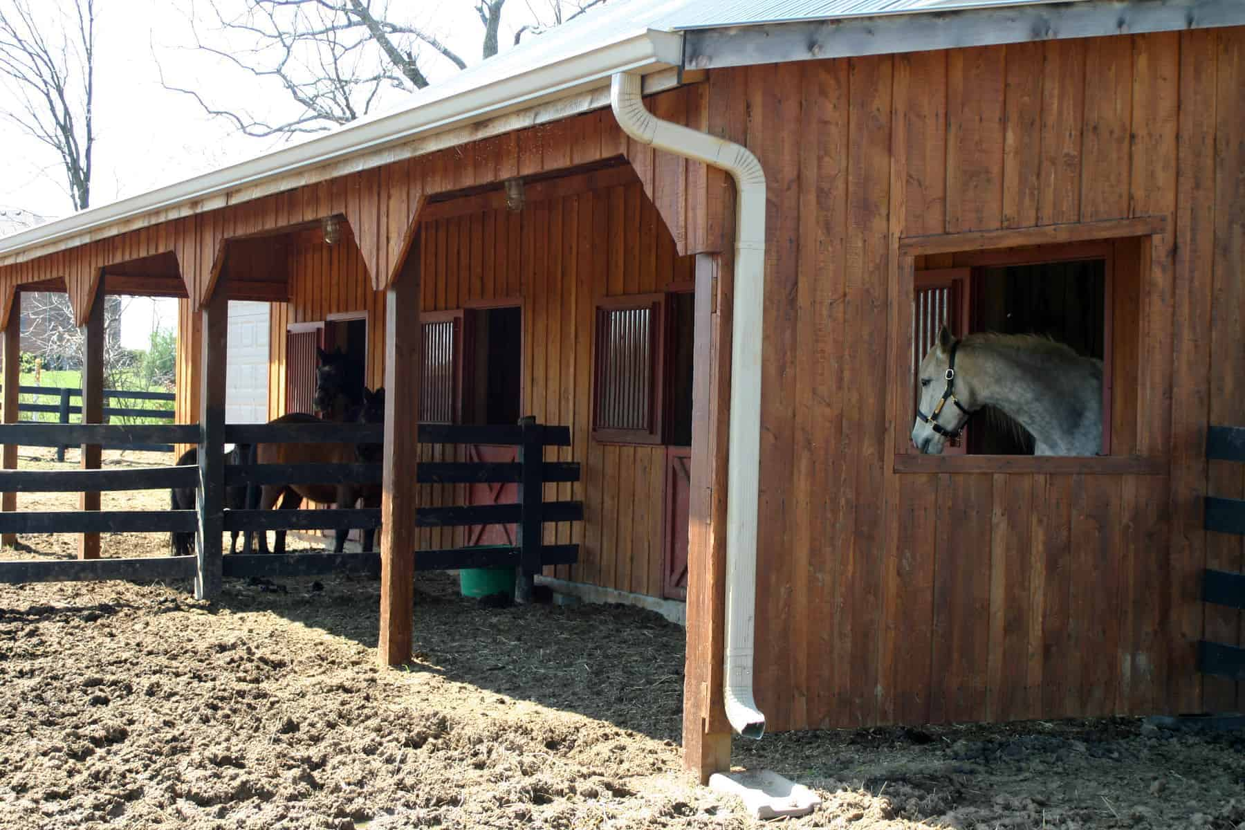 Budget Barn Design The Horse