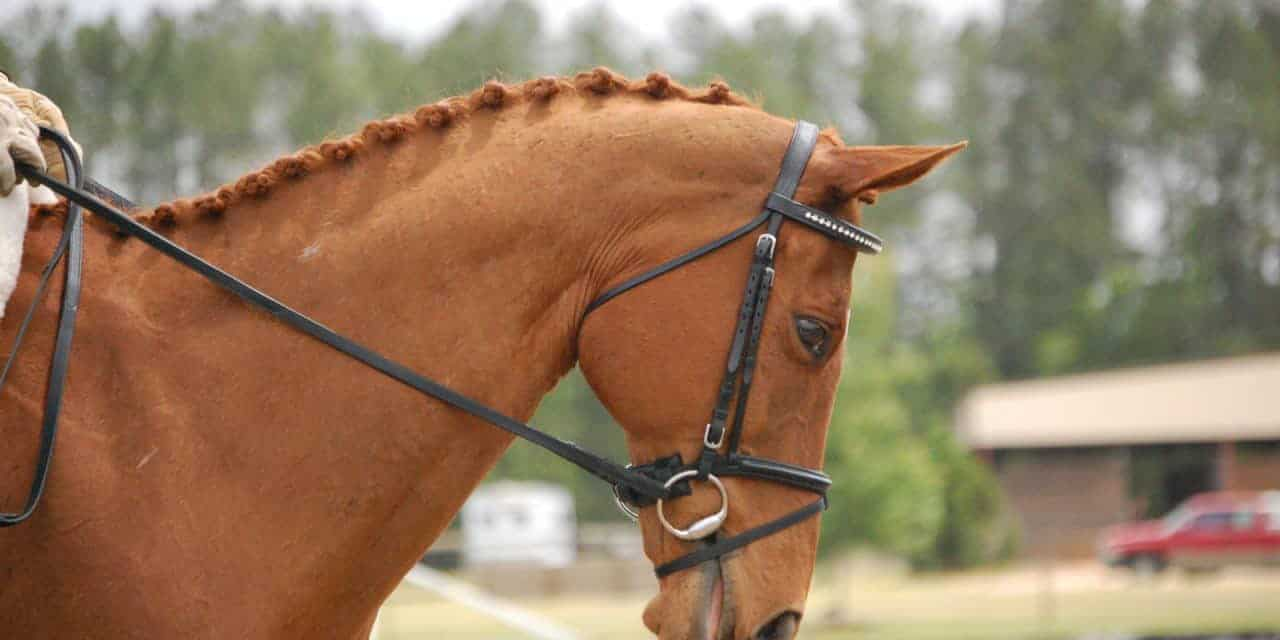 Is Your Horse's Bit Harmful to His Mouth? – The Horse