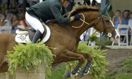 How Common Are Equine Gastric Ulcers?